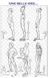 Chaînes musculaires et articulaires GDS