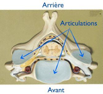 Articulations cervicales
