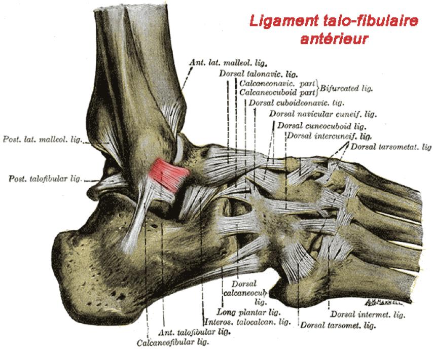 Entorse de la cheville orthopedie pour tous for Douleur interieur pied gauche