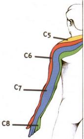 NCB C6:C7